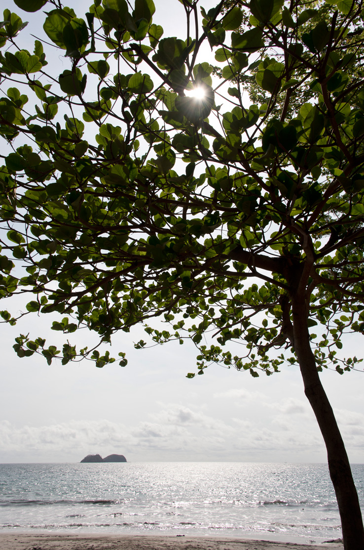 Sun Star photographed through the trees at Playa Hermosa in Costa Rica. Photographed by Kristen M. Brown, Samba to the Sea Photography.