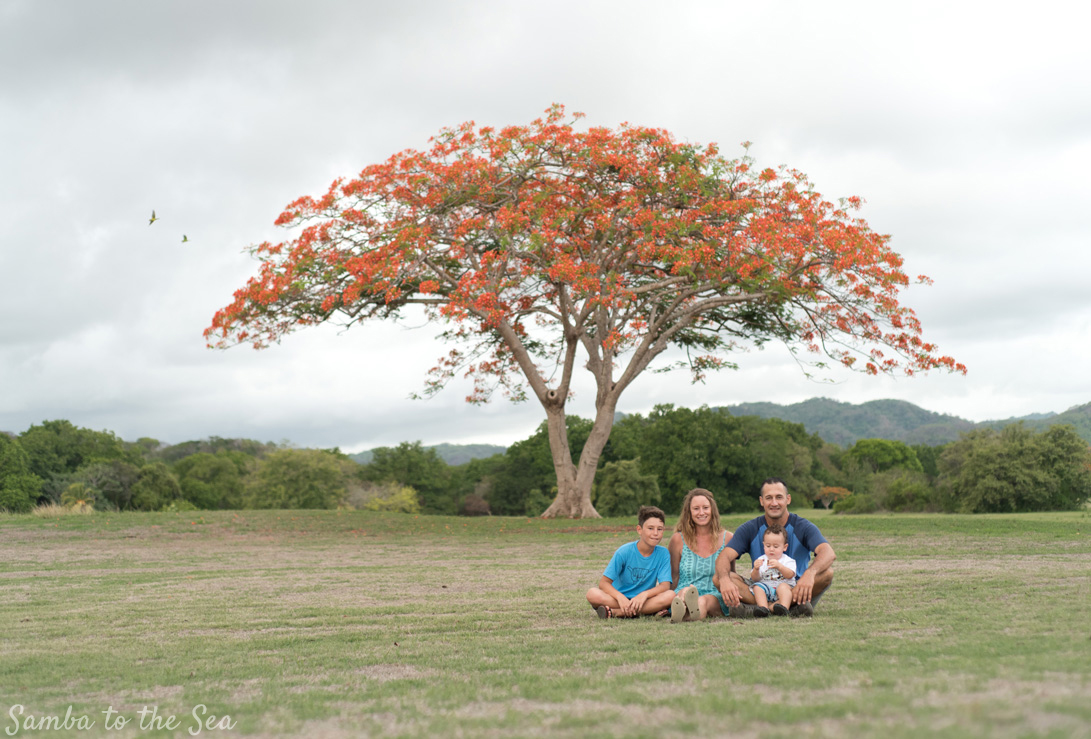 Family photo with a fire red Malinche tree in full bloom in Playa Grande, Costa Rica. Photographed by Kristen M. Brown, Samba to the Sea Photography.