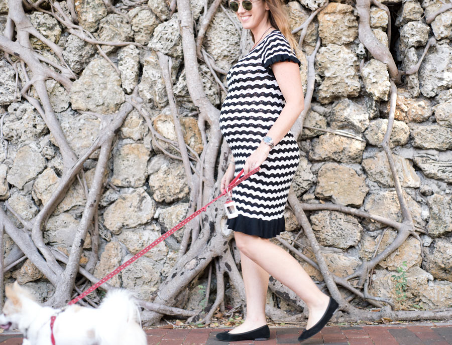 Glowing pregnant woman walking her long hair Chihuahua in Coconut Grove, Florida. Photographed by Savannah Maternity Photographer, Kristen M. Brown, Samba to the Sea Photography.