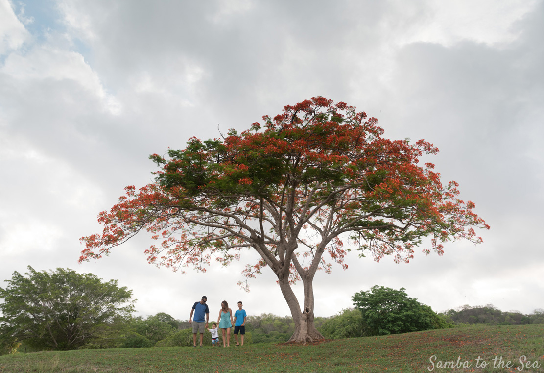 Playa Grande Costa Rica Photographer