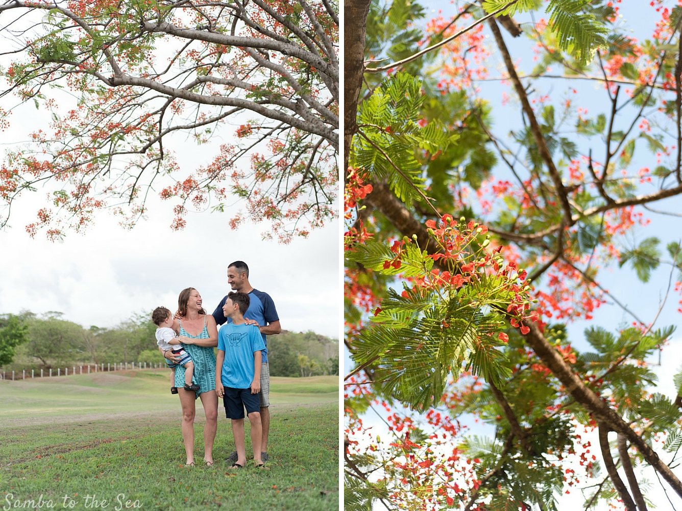 Family photo under a fire red Malinche tree in full bloom. Photographed by Kristen M. Brown, Samba to the Sea Photography.