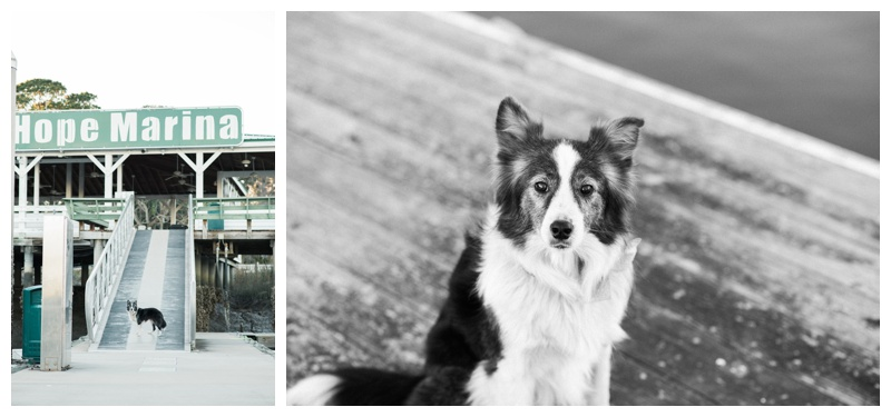Australian shepherd on the docks at Isle of Hope Marina in Savannah, GA. Photographed by Kristen M. Brown, Samba to the Sea Photography.